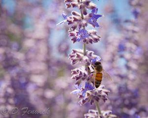 Bees2-Web.jpg
