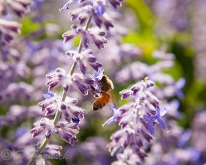 Bees3-Web.jpg