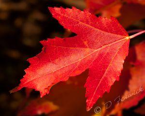 fall-leaf-1-web.jpg